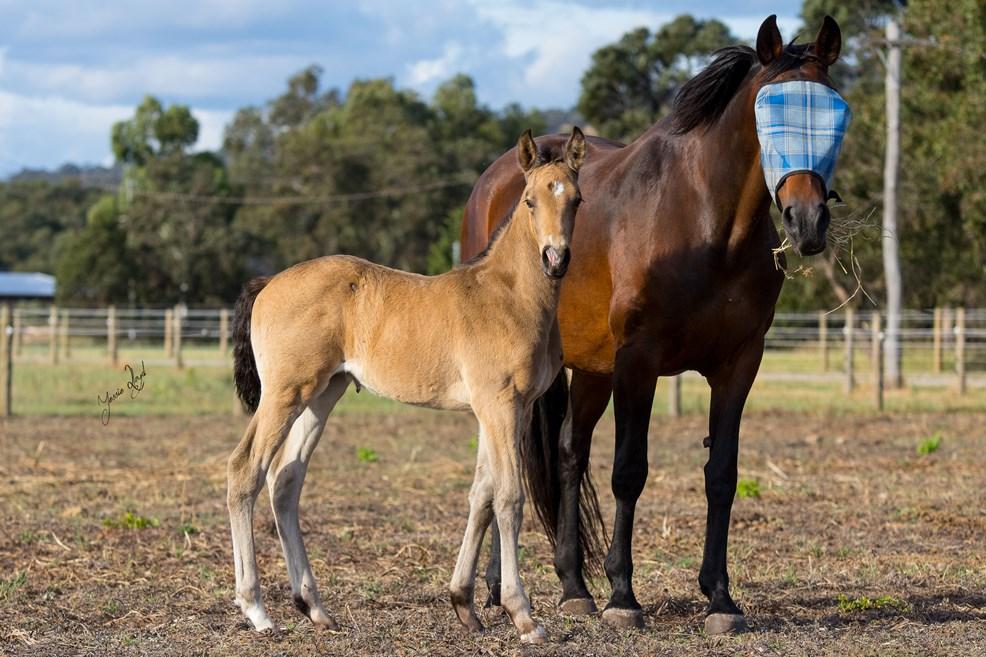 foalsballadandheidi2