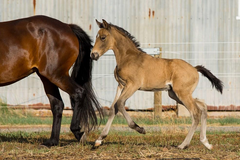 foalsballadandheidi3