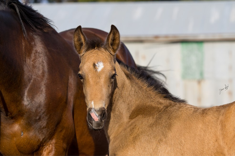 foalsballadandheidi4