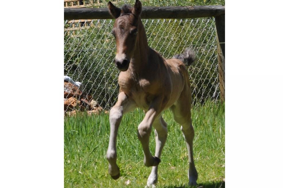foalsbuckycanterweek1