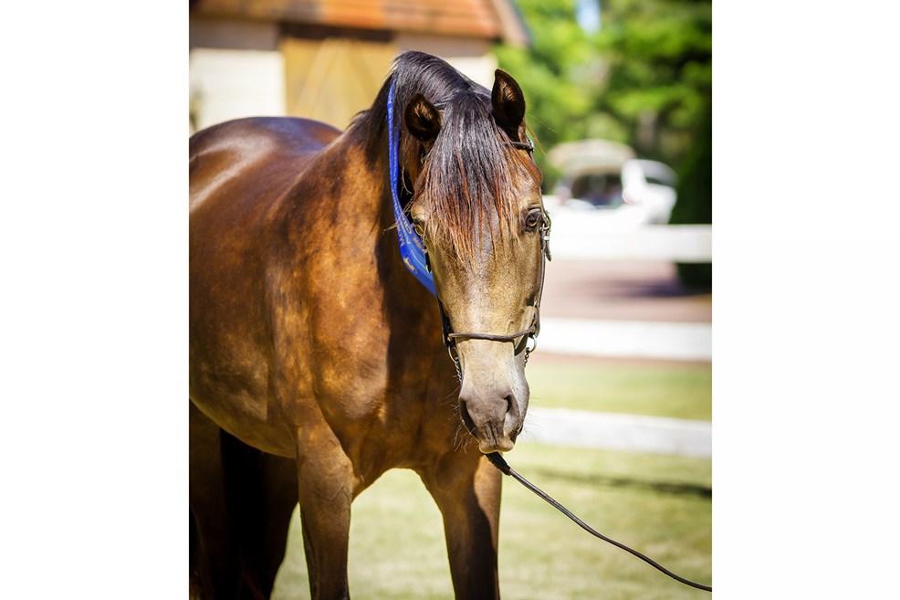 foalsbuckychampion2