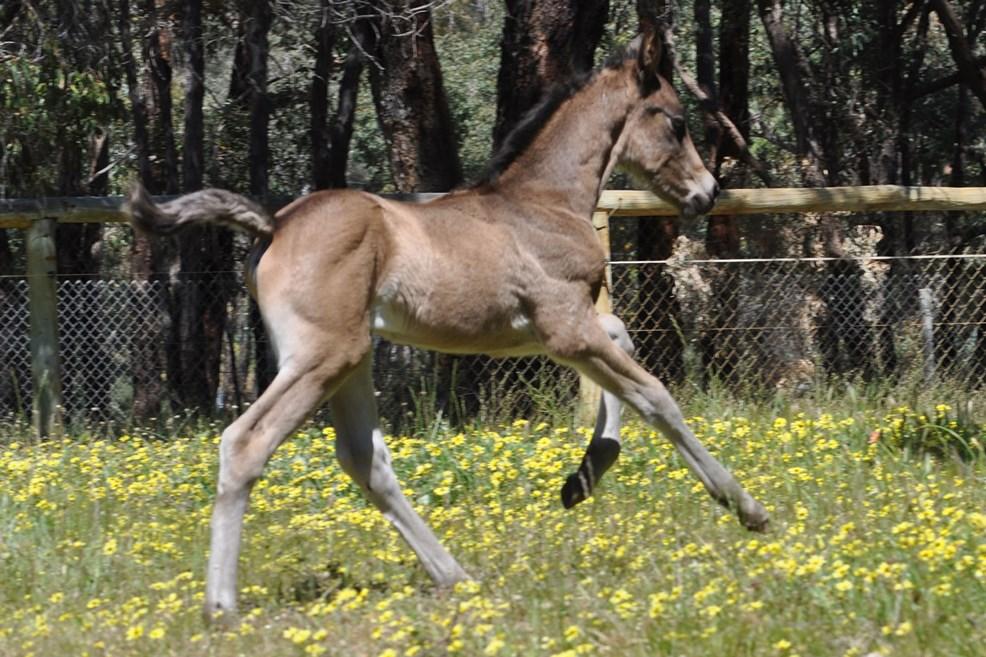 foalsbuckyfree