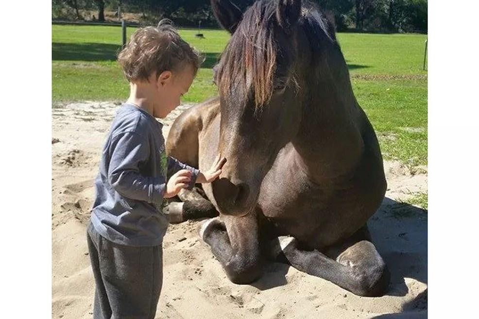 foalsbuckyfriend