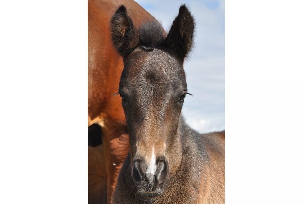 foalsmelodyhead