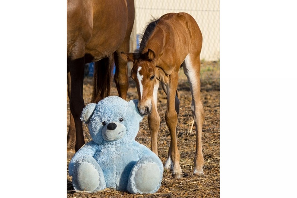 foalsrosewithtoy